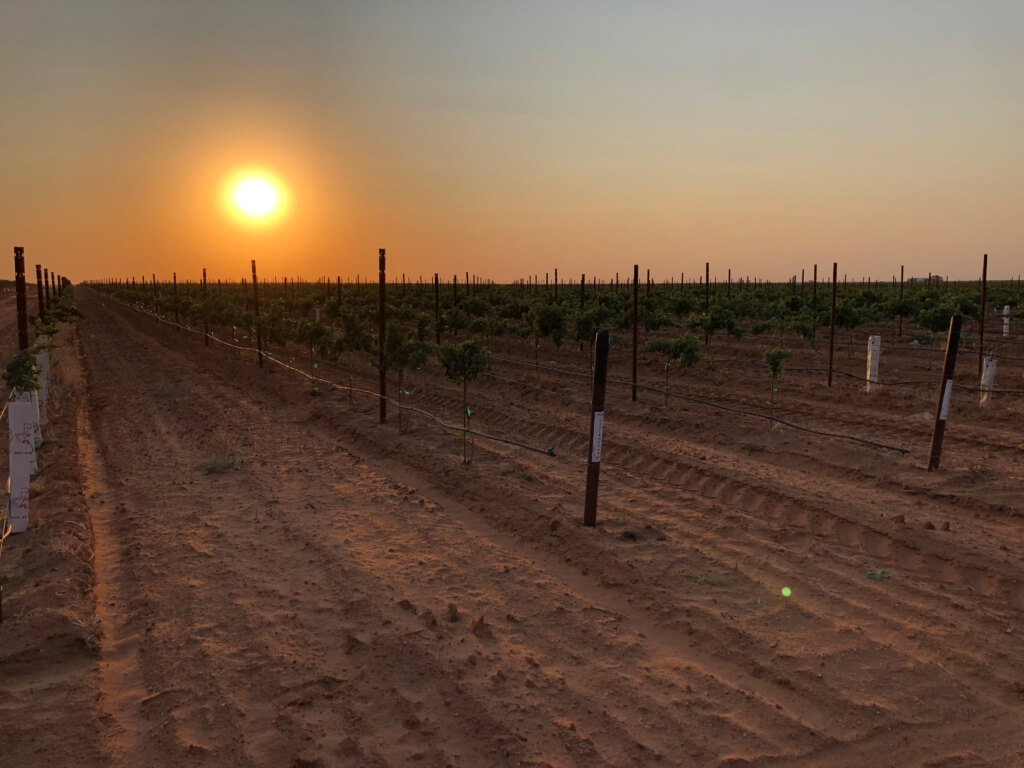 Will Chemical Damage Kill the Texas Wine Industry?